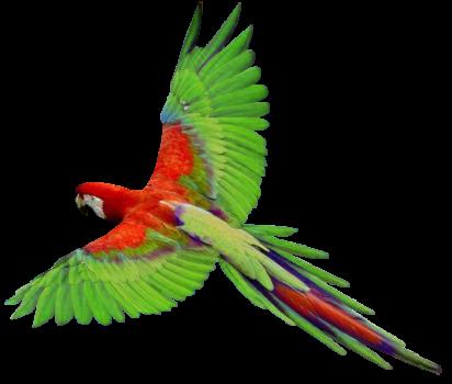 Humac papagáj